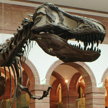 Senckenberg Museum: A trip to the future